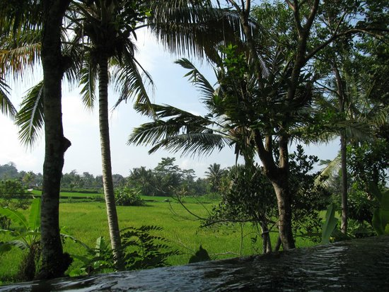 Ubud Padi Villas: Vistas piscina
