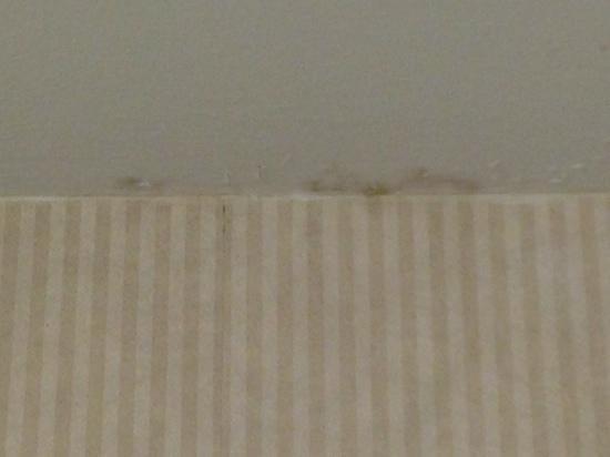 Millennium Cincinnati: water stains on ceiling (multiple spots in bath and bedroom)