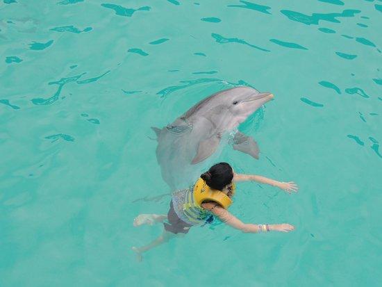 Interactive Aquarium: Nado com golfinhos