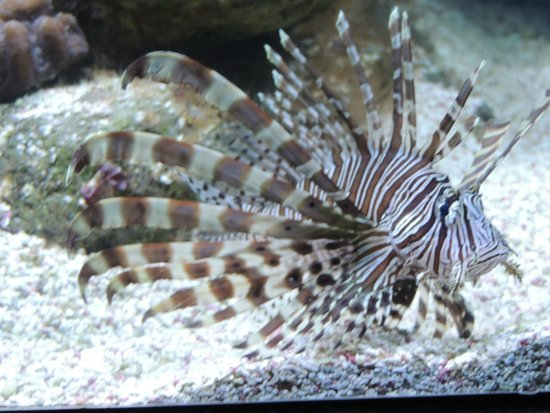 Interactive Aquarium: Aquário com peixes