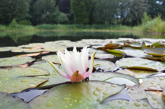 Moddershall Oaks: The gorgeous pond area