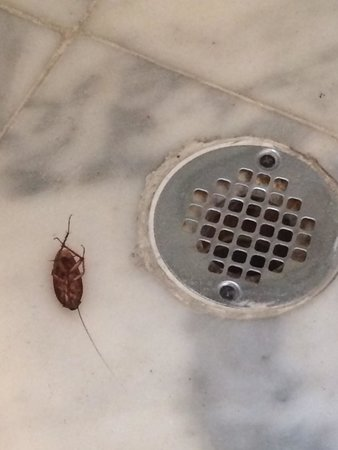 Hotel Shelley: on our last morning there I went into the bathroom to find this wiggling around in the shower..