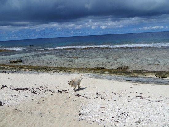 Green Lodge: La plage en face de la pension