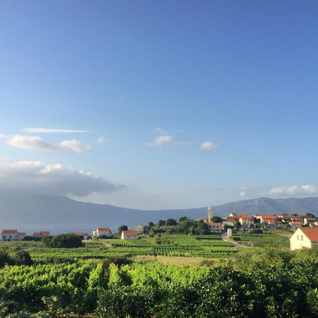 Korcula Explorer: View at one of the vineyards.