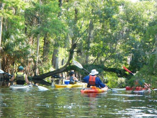 Adventures in Florida: The Swamp!!