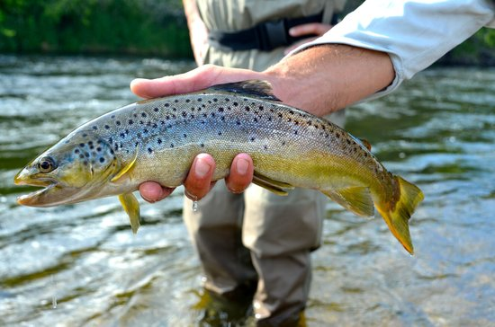 Utah Pro Fly Fishing Tours : One of many fish this day ...