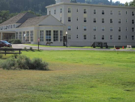 Mammoth Hot Springs Hotel & Cabins: Mammoth Hot Springs Hotel with resident elk roaming around.