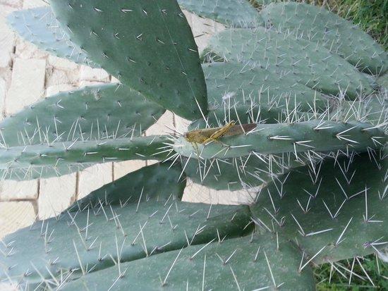 Villa Pia: cactus