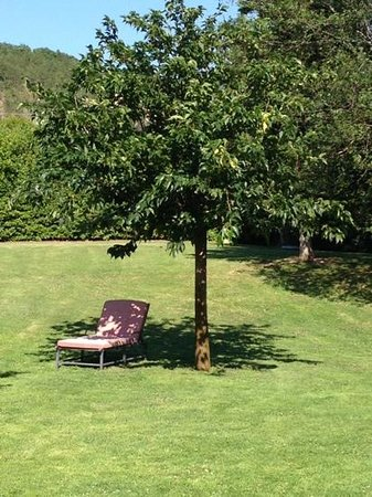 Locanda del Gallo : Shadow under the newly planted Mulberry tree