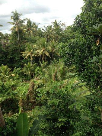 Gunung Merta Bungalows: Uitzicht vanaf ons terras