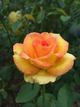 Washington Oaks Gardens State Park: Rose garden