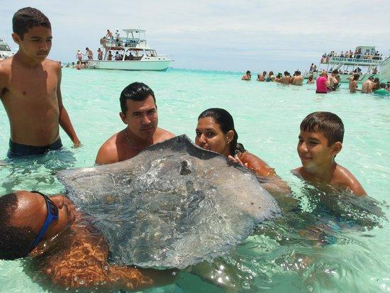 Cayman Ocean Adventures Stingray City & Snorkeling Tour: Mama kissing the stringray
