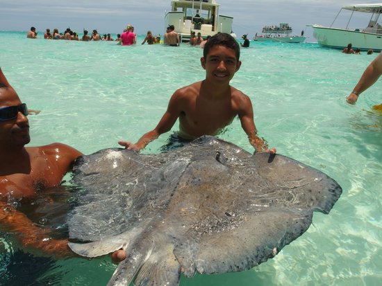 Cayman Ocean Adventures Stingray City & Snorkeling Tour: Having fun