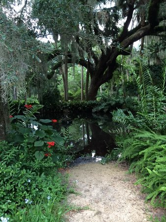 Washington Oaks Gardens State Park: Little pond, watch out for the snakes!