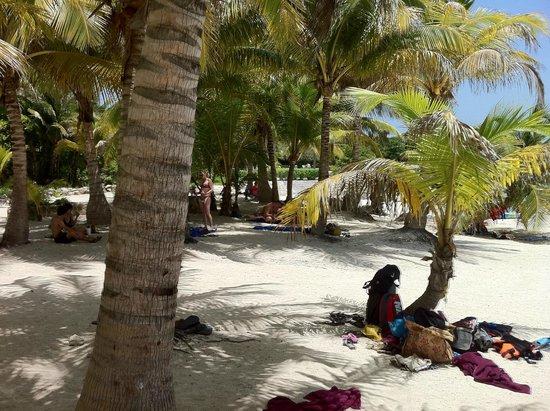 Plage d'Akumal: Palm trees
