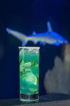ocean themed cocktails at atlantic grille s jellies bar shark tank