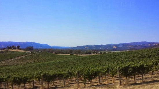 Wine Country Tour Shuttle: Napa Valley