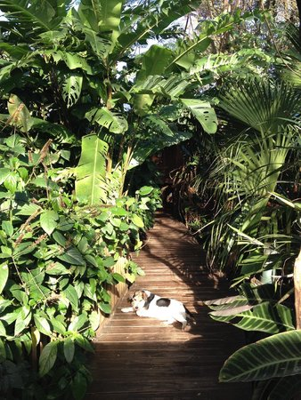 Secret Garden Iguazu B&B: the path from the rooms to the main house and dining area...with Roxy the dog!