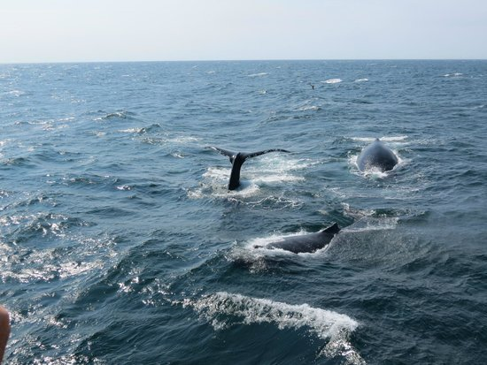 Hyannis Whale Watcher Cruises: Just 50 feet from the boat!