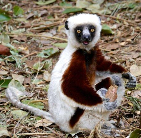 Lemurs Park : Don't look, Lemur business!