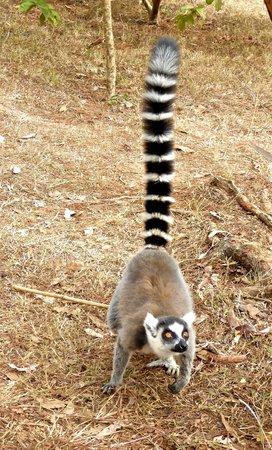 Lemurs Park : Got any bananas?