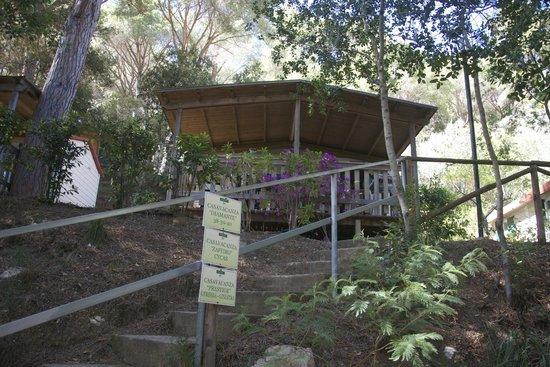 Camping Village Rosselba le Palme : diamante