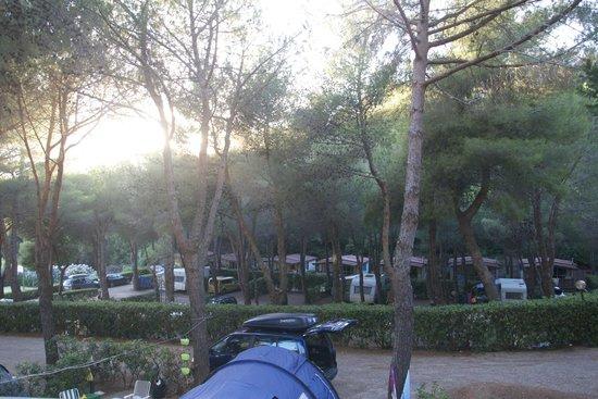 Camping Village Rosselba le Palme : piazzole