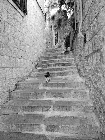 Hotel Cavtat: Side Streets