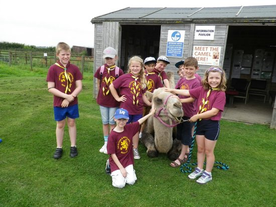 Oasis Camel Park: meet the camel