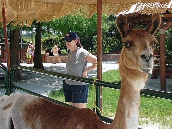 Big Cat Habitat and Gulf Coast Sanctuary : The petting zoo area