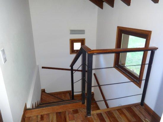 Bosque del Nahuel: Escalera