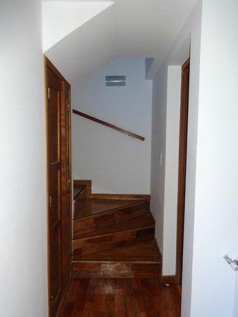Bosque del Nahuel: escaleras