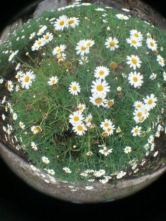 Pumapungo Museum and Arqueological Park - MCYP : Flores