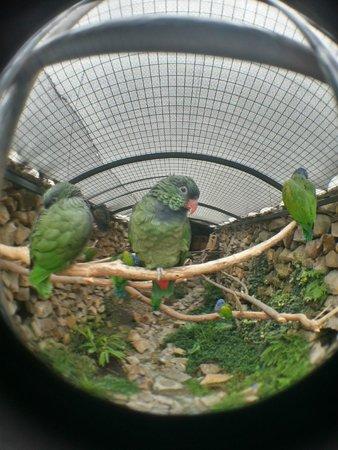 Pumapungo Museum and Arqueological Park - MCYP: Papagaios