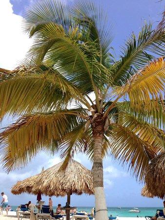 Hotel Riu Palace Aruba: From the beach