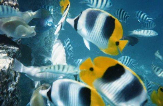 Bora Bora Photo Lagoon : fish off our deck