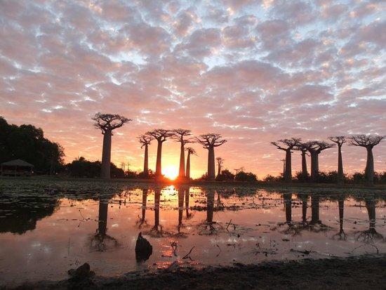 Morondava, Madagascar: Avenida de los Baobabs
