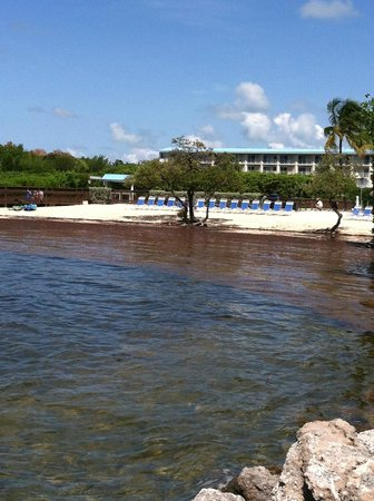 Ocean Pointe Suites at Key Largo: View from Jetty of Private Beach Area