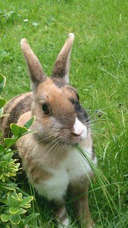 Onderland : Het lieve konijn