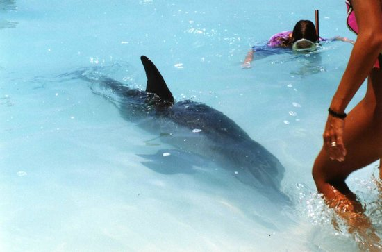 Grace Bay : Jo Jo the dolphin