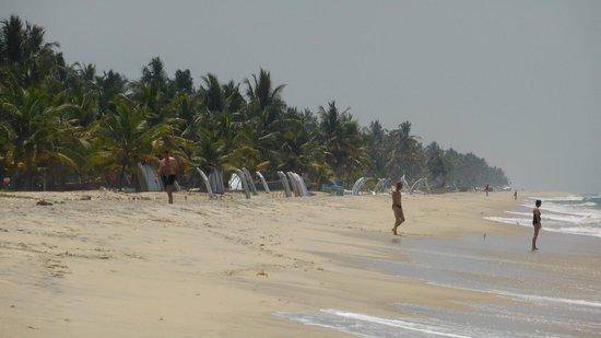 Marari Beach Villas: Sablefin et cocotiers