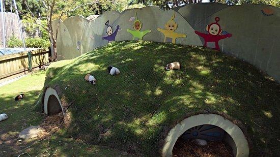 Drusillas Park: guinea pig great home