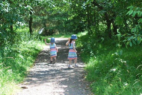 Rosliston Forestry Centre: A walk