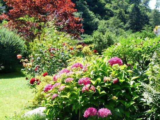 Eremita-Einsiedler: Blumenmeer in unserem Garten