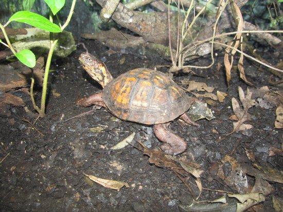 Newport News, VA: turtle