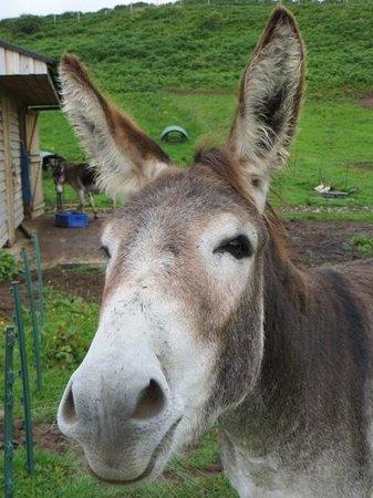 Skye Shepherd Huts: cheery donkeys