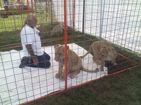 Serenity Springs Wildlife Center: More pics of the lion cubs