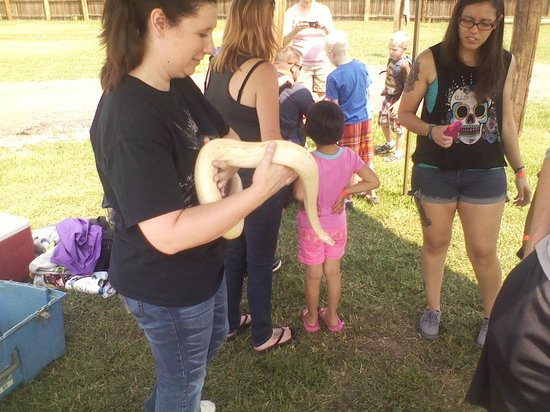 Serenity Springs Wildlife Center: I took a pic, but I wasent gonna hold this snake :P