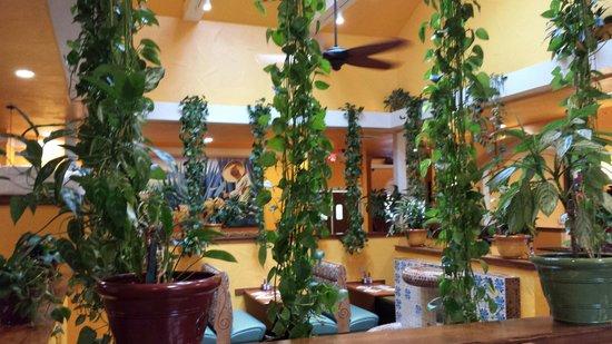 Centralia Washington Mexican Restaurants
