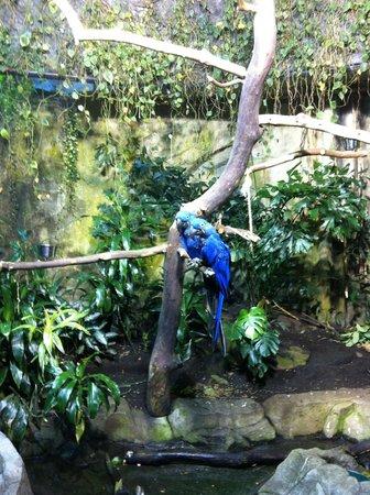 Vancouver Aquarium: Parrots